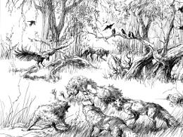 圆珠笔画练习,森林狼