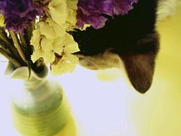 花与喵的纯粹组合