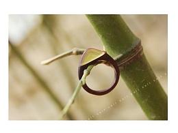[原创作品]独立设计|纯手工火焰纹紫檀木戒指