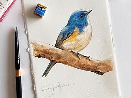原创水彩|鸟儿的绘画过程