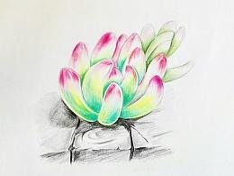 彩铅练习——多肉植物