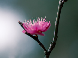 【随拍】春暖花开,一切都是美好而又有希望
