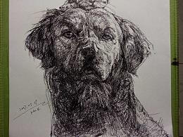 水笔画-守护猫的狗