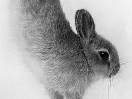 我的黑白世界  动物王国思密达
