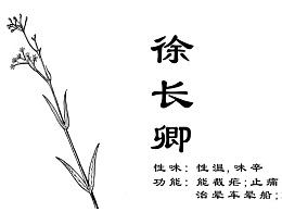 中草药手绘标示