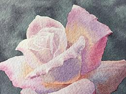 用一年时间画了99朵玫瑰,献给我最爱的姑娘