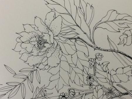 牡丹手绘画黑白