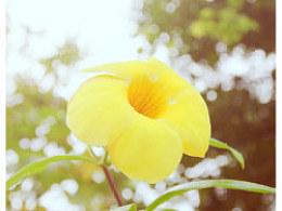 【YBP】云山下の小花