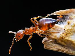 微距蚂蚁续集