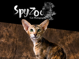 spyzoo眼中的沈阳tica猫展