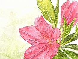 [水彩twee]可能被雨淋过的花
