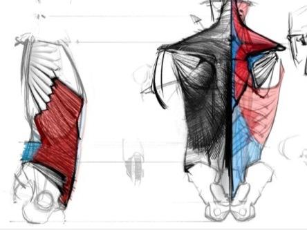 艺用人体解剖结构图文教程/背部运动原理与关键坐标