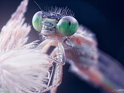 《昆虫记.贰》