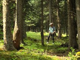 坎布拉森林公园