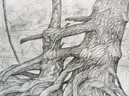 悠悠古树--钢笔画