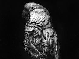 OY钢笔画:鹦鹉