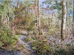 朱云峰钢笔画《日光森林》