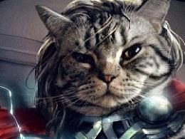 我家的猫猫cos