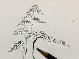 一棵对节白蜡盆景的设计效果图