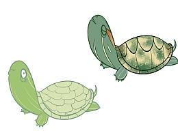 亲爱的小龟儿