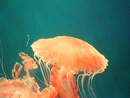 透明の海底世界