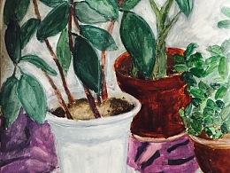 手绘写生植物