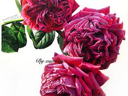 彩铅月季花