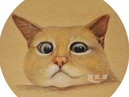 彩铅画---猫猫