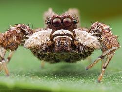 一组戴雷朋眼镜的【小蜘蛛】