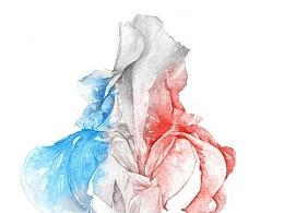 鸢尾花 - 自由 平等 博爱