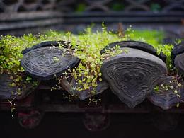 小景怡情,扬州片段
