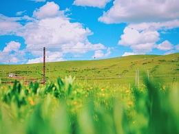 川西北的大草原
