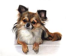彩铅作品-小黄狗