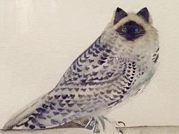 我的伯曼猫头鹰