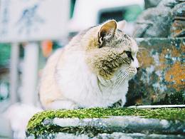 【镰仓·江之岛】猫岛