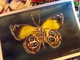 8-8蝴蝶