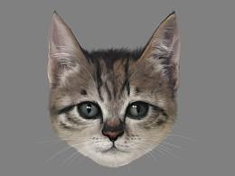 如何画一只可爱的猫咪【头部】