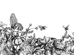印加果油插画