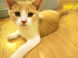 「猫咪餐厅」约猫和妹纸才是正经事。