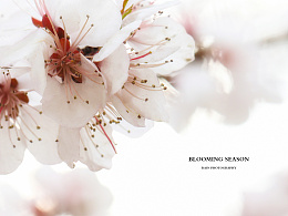 【20170325】BLOOMING SEASON