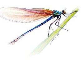 ZD(周丹)圆珠笔画-昆虫小动物篇