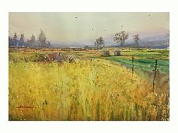 金色的稻田