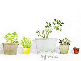 阳光下的植物们