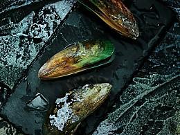 美食摄影-青口贝海鲜