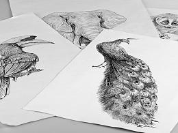 雨林古树茶品牌包装插画