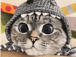 nala猫