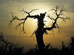额济纳-怪树林-日落