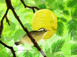 【插画】鸟
