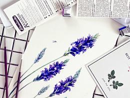 小花的水彩~一刹紫焰开~