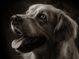 一些宠物棚拍肖像